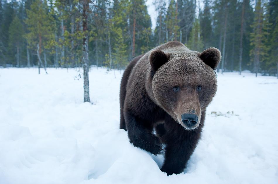 01_unterthiner_bear